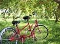 Seggiolini bici quale scegliere